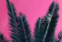 #pinkxgreen