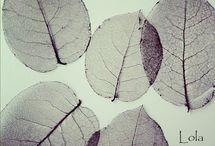 hojas reales