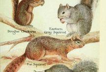 ilustracje zwierząt