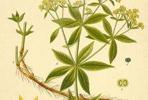 Botanical & Scientific Prints / by Nancee Martin