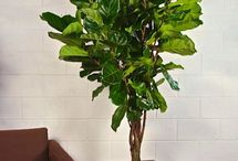 Houseplants/Gardening Ideas / it's not easy being green.