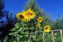 Увидеть красоту / Растения нашего поместья