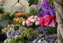 My Dream Flower Shops