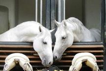 horse love,animals