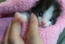 kitten en katten