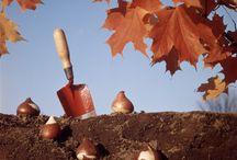 gardening / by Andrea Schumaker