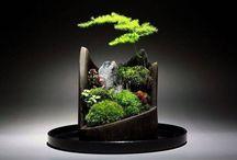 Aankleding woonkamer planten