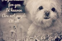 My dog ! my beloved 13.5 years old precious boy is gone....