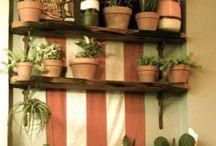 I like plants / by Courtney Readnour