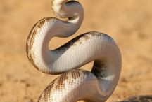 Reptiles incl. lizards