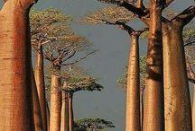 De los árboles