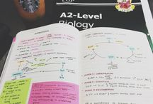 Study inspo