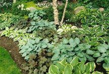 Цветники - красивые сочетания листьев / Ландшафтный дизайн, примеры красивых сочетаний растений