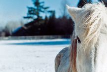 Film Photography: Animals / Film photos of animals (mainly dogs and horses...)