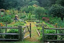 Garden Ideas / Three acres, gardens, fruit trees, brambles, wildlife. What do I do with it all? / by Robin Follette