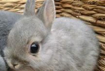 BUNNIES! / Bunnies