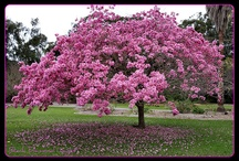 Beautiful Flowering Trees / by Black Diamond Images