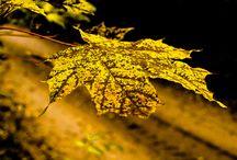Jesień / Moje zdjęcia jesien