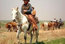 Cattle Drive Vacations / Places to play cowboy on a cattle drive, including working ranches and dude ranches.