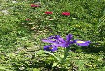 Ardahan'ı Tanıyalım / Yüksek ovaları, akarsuları, ormanları, zengin çiçek çeşitliliğine sahip yaylaları ve iki gölü ile Ardahan keşfedilmeyi bekleyen bir doğa cennetidir.