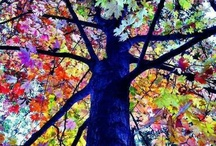 Inspiration: colors