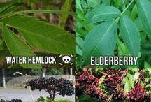 yenilebilen bitkiler