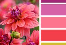 Idées colorées