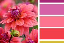 Barvy kombinace