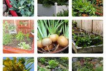 Sustainable Food!!