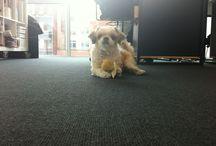 Hunde im Büro / #Bürohunde und andere tierische Office-Besucher!