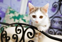 Cat advice and top tips / Check out our blog at http://www.longcroftcathotel.co.uk/blog/ for great cat tips, advice and cat chat.  #cat #cats #catchat #cutecats #cattips #catadvise