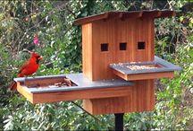 Ola i domki dla ptaków...