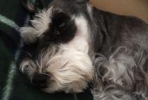 Doggy life / Lotto, my cute friend.