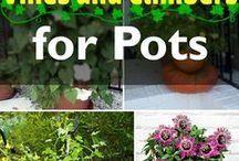 Plants and flowers / Flowers, pots, plants