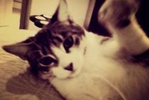 Gatos y Perros so Cute! / by Dani Alfonsina