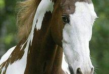 KONIE-HORSES