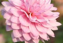 bloemen voor in de tuin