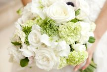 Green & White colours theme wedding / Sample collections for a wedding