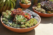 Cactus & succulents / by Pilarin Bes