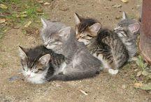 Kitties / by Julie Brown