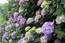 Kvety a zahrady