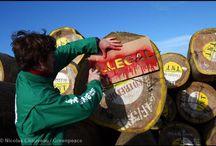Defensa de los Bosques en el Mundo. / Acciones y protestas pacíficas en defensa de los bosques nativos alrededor del mundo. ¡Compartilas! / by Greenpeace Argentina