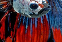 fish colors / farby ryb