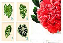 Vintage Botanical & Nature Prints