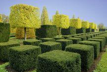 Сформированные деревья (ТОПИАРНЫЕ ФОРМЫ)