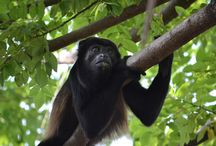 Vacation Ideas / Great things to do while on vacation in Costa Rica.