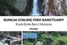 Malaysia - Kuala Kubu Baru / The best places to visit when you travel to Kuala Kubu Baru, Malaysia. Click on the links to save FREE travel guides for Kuala Kubu Baru to your Pinterest boards.