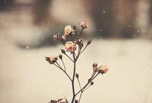 flowers /bloemen