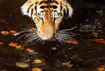 Amazing animals / Amazing animals from all around the world
