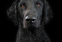 Dog studio portraits